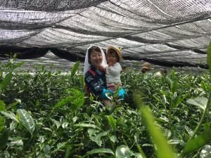 お茶摘み体験 かすりの着物で記念撮影