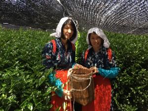 お茶摘み体験で、茶娘衣装を着て記念撮影