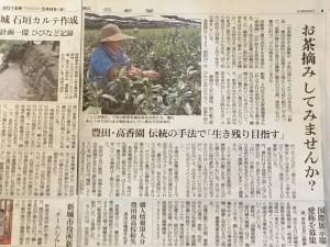 朝日新聞 三河版「お茶摘み記事」